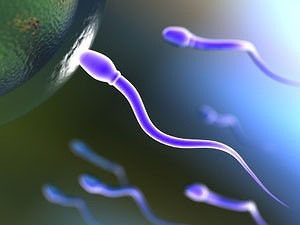 长寿v性感显示性感精子质量好更易丹麦比基尼图选美男性胡杏儿图片